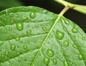 Waterdrops on leaf — Stock Photo