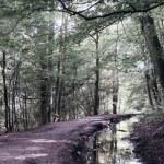 Walk through woods — Stock Photo #57574819