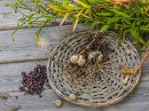 Tubers and bulbs of lilies — Stock Photo