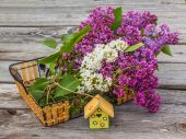 Lilac and decorative birdhouse — Stockfoto