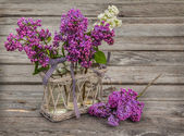 Purple-blue lilac — Stock Photo