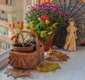 Autumn arrangement — Stock Photo