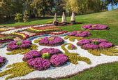 Chrysanthemums Show Landscape Park — Stock Photo