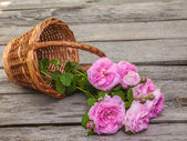 Bouquet of wild rose — Stock Photo