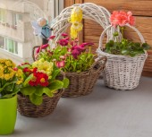 Primrose and daisies — Stock Photo