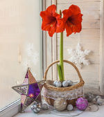 Red Hippeastrum with Christmas decoration — Stock Photo