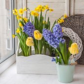 Daffodils and hyacinths in balcony boxes — Stock Photo