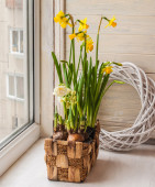 Yellow and white daffodils in a basket — Stock Photo