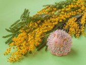 Easter background with mimosa — Stockfoto