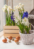 Easter decoration of daffodils — Stock Photo