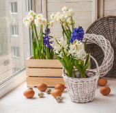 Easter decoration of daffodils — Foto de Stock