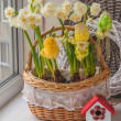 Easter decoration with daffodils — Stock Photo #68350451