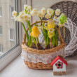 Easter decoration with daffodils — Stock Photo #68350455