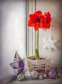 Red Hippeastrum flower and toys on a window — ストック写真