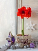 Red Hippeastrum flower and toys on a window — Stok fotoğraf