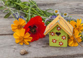 Flowers, snail and decorative starling house — Stock Photo