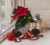 Red Poinsettia  on the window — Stock Photo