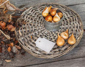 Dug out tulips bulbs after flowering — Stock Photo