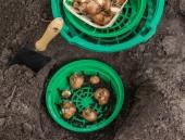 Pflanzung von Blumenzwiebeln Narzissen in einem Korb — Stockfoto