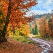 Footpath winding through colorful forest — Stock Photo #53088263