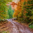 Footpath winding through colorful forest — Stock Photo #53088291