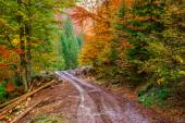 Footpath winding through colorful forest — Stockfoto