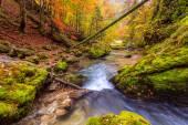 крик глубоко в горном лесу — Стоковое фото