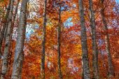 Colorful and bright autumn forest — Stock Photo