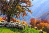 Autumn landscape, sheep, shepard dog — Stock Photo