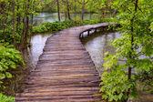 Boardwalk in the park — 图库照片