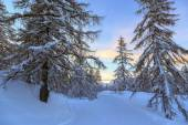 Winter forest in Alps near Vogel sky center in Slovenia — Stock Photo