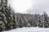 Karlı kış orman — Stok fotoğraf