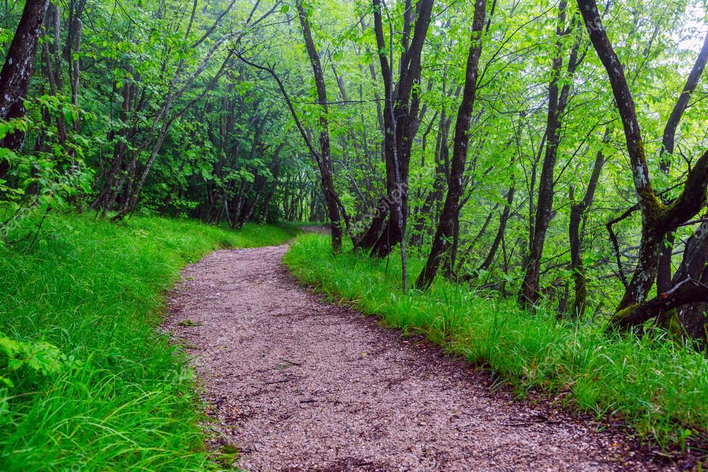 голе в лесу