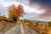Morning in Carpathians mountain — Stock Photo