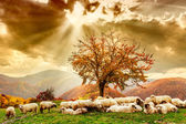 Sheep under the tree and dramatic sky — Stock Photo