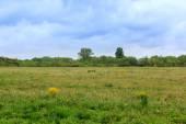 Green pastures — Stock Photo