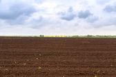 Farm field in spring — Stock Photo