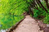 Path near a forest lake in Plitvice Lakes National Park — Stock Photo
