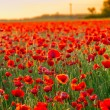 Poppies field at sunset in summer — Stock Photo #73154333