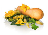 Butternut squash with green leaves and huge flowers — Stock Photo