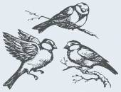 Vector freehand drawing. Tits, sparrows and bullfinches on branc — Stock Vector