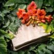 Campsis radicans flowers on old open book  — Stock Photo #55945635