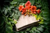 Campsis radicans flowers on old open book  — Stock Photo