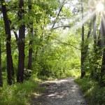 Path through oak avenue on sunny summer day — Stock Photo #62408383