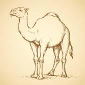 Camel. Vector drawing — Stock vektor