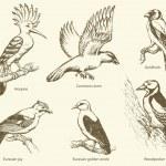 Vector set of birds: crow, hoopoe, oriole, woodpecker, jay, gold — Stock Vector #67357713