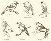 Vector set of birds: Bullfinch, Redstart, Nuthatch, Flycatcher, — Stock Vector