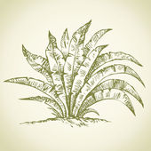 Tropical bush. Vector drawing — Vettoriale Stock