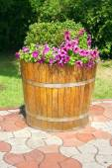 Decorative flower bed — Stock Photo