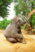 Elephant plays hula hoop, Thailand — Stock Photo